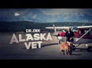 Доктор Ди: ветеринар Аляски   40 змей и больше