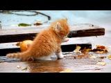 Грустная история про котика и собаку! Дружба кота и собаки.