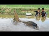 КРОКОДИЛА ПОЙМАЛИ смотреть с 1120 (Electricity Fishing Catch Crocodile In My Village By Two Brave Boys,)