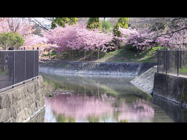 【4K】春の京都(2018/3/18)
