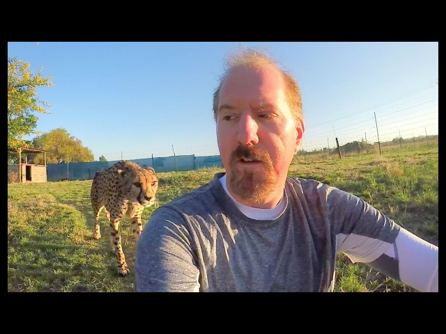 Turning Your Back To Leopards Cheetahs Predatory Nature Part 2