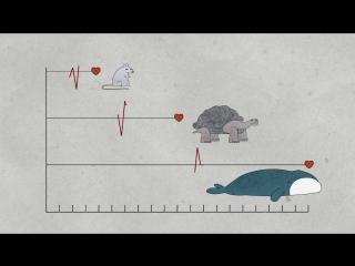 Почему у животных такая разная продолжительность жизни?