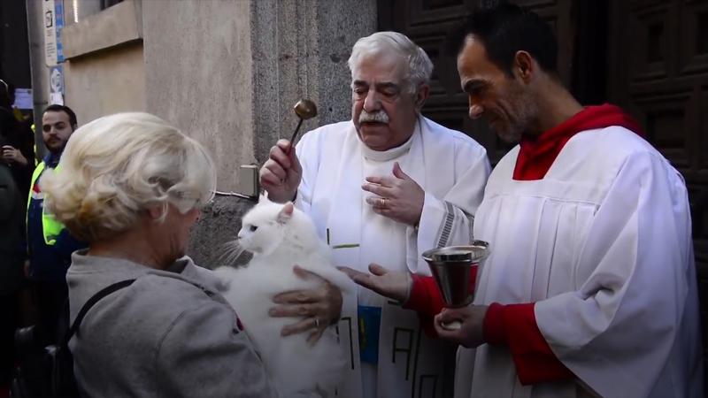 Испанцы празднично обрызгали животных
