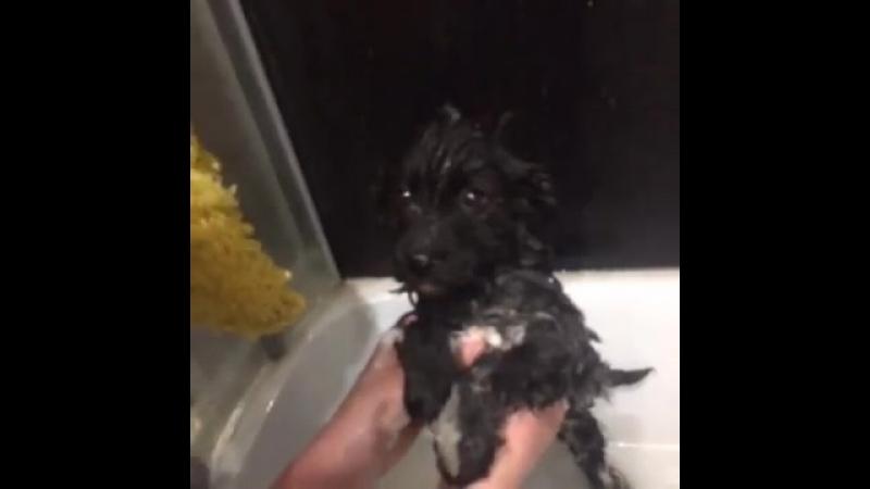 история спасения одного щенка