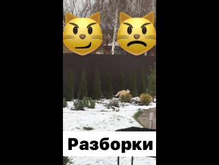Instagram video by Anastasia Kozhevnikova