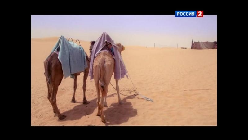 Человек мира, выпуск 63 - ОАЭ. Абу-Даби. Место под солнцем. Часть 1