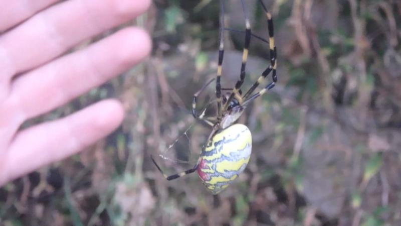 пауки в тайшане