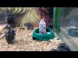 The Broken Hamster