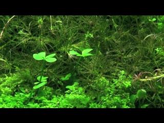 Aquascaping - Aquarium Ideas from The Art of the Planted Aquarium 2011, part 1