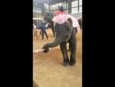 Парк Nong Nooch Tropical Garden шоу слонов