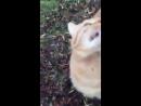 Поющий котей