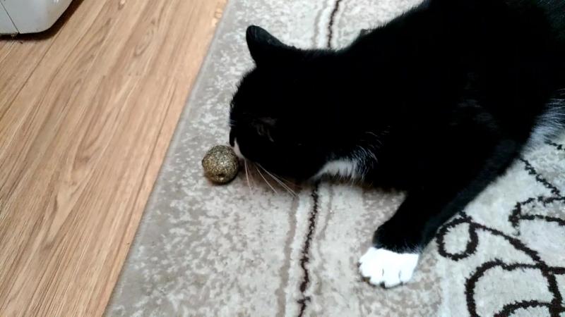 Чудо шарик для кота из Китая