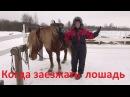 Когда пора заезжать лошадь