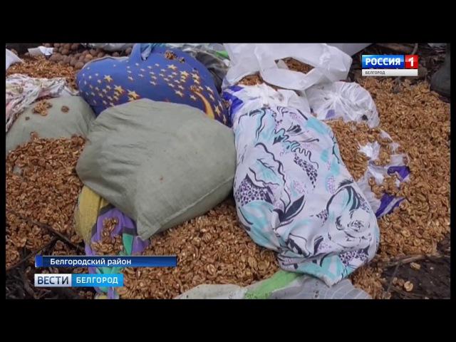 ГТРК Белгород - Более 4 тонн контрабандных грецких орехов уничтожили на полигоне