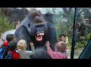 the gorilla broke the glass... and then this happened...