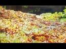 Музыка Осени без Слов! Очень Красивое Видео