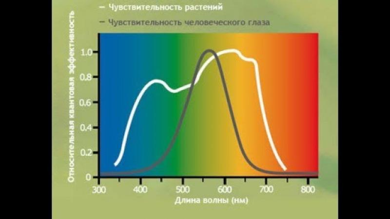 Теория и практика применения белых светодиодных ламп для растений