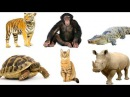 КАК ГОВОРЯТ ЖИВОТНЫЕ. Названия Животных для Детей. How say Animals Sounds of animals for Kids.