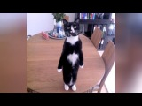 BE SERIOUS or DIE LAUGHING - Which are you - FUNNY ANIMAL VIDEOS