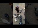 Прогулка около моря. Кормим голубей. На прогулке около моря. Никите 2 года и 5 меся...