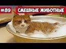 Смешные животные - кот в ванной Bazuzu Video ТОП подборка 89, январь 2018