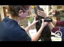 Венепункция ярёмной вены у собаки / Canine Jugular Venipuncture