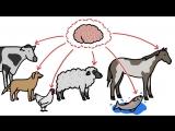 Почему у домашних животных такой маленький мозг?