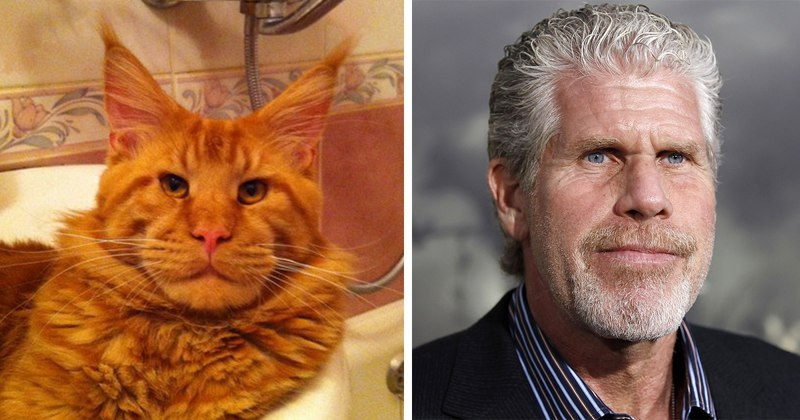Коты-двойники актеров из Голливуда