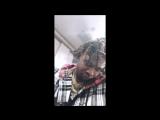 Snippet: Trippie Redd — «Untitled» [2016]