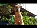 Watching Village Dogs on Cool Day-Wow Spend Your Free Time With Lovely Dogs -- Wild Pet Daily