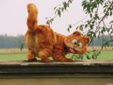 SLs Танец кота Гарфилда