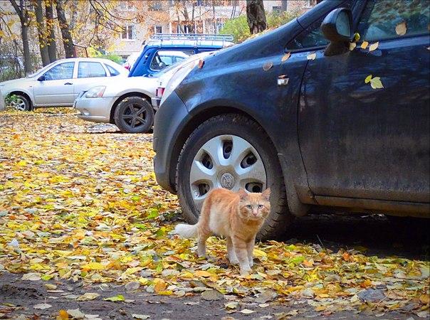 #подписчики  Золотой октябрь в Малоярославце. 2017 г.