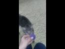 Кошка Мишка - Лампочка бегает за мячиком