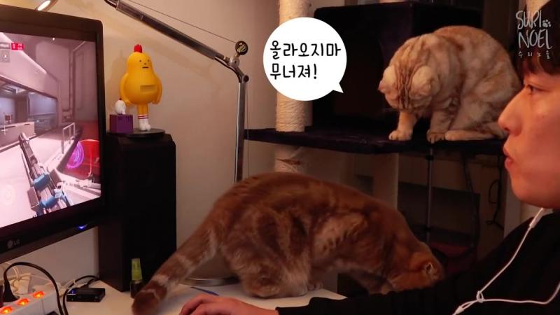 고양이가 주위에 자꾸 모여들어요 - 인기만점 집사