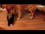 Дружелюбные котики