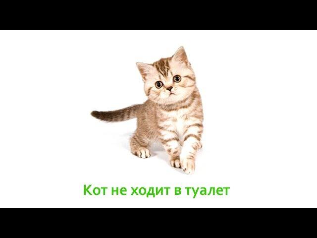 Кот не ходит в туалет. Ветеринарная клиника Био-Вет.