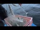 Рыбалка в Финляндии Ловля Ряпушки Рыбалка на сети