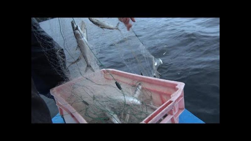 Рыбалка в Финляндии. Ловля Ряпушки. Рыбалка на сети.
