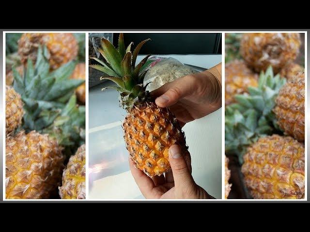 Как вырастить ананас из верхушки в домашних условиях - (ч.1)