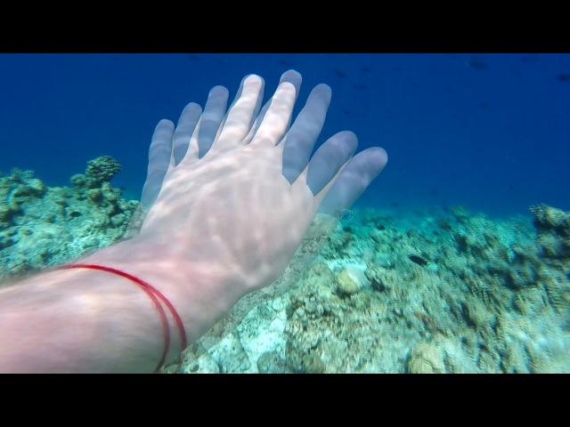 Maldives. Underwater Life. Snorkeling.