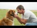 Видео к фильму «Собачья жизнь» 2017 Трейлер дублированный