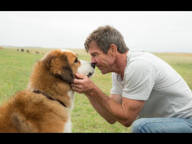 Видео к фильму Собачья жизнь 2017 Трейлер дублированный