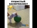 Пушистый баскетболист