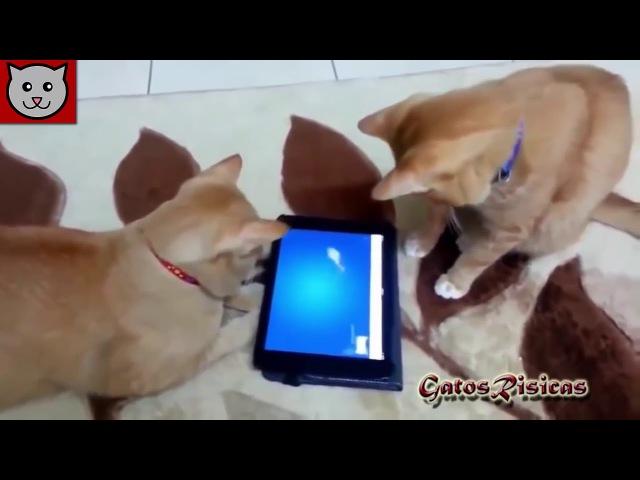 Reto 2 Intenta NO REIR 2017 Vídeos GATOS para morirse de la risa Videos de Gatos más chistoso