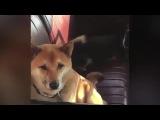 AWOLNATION - RUN DOG EDITION #coub