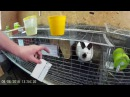 карточки учета кроликов молодняк маточные