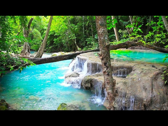 Waterfall Jungle Sounds - Relaxing Tropical Rainforest Nature Sound Singing Birds Ambience