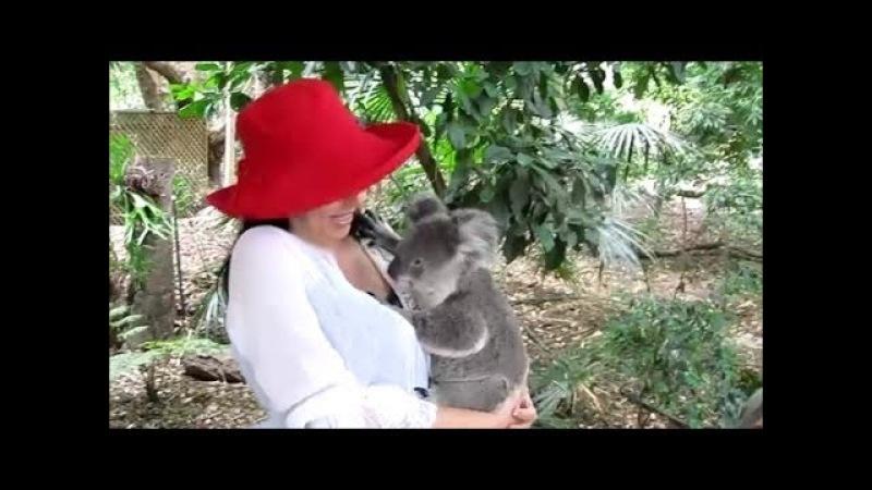 Cuddling Koalas Feeding 'Roos at Lone Pine Koala Sanctuary