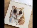 Масковая сипуха @tivel owl