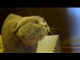 Говорящий котяра